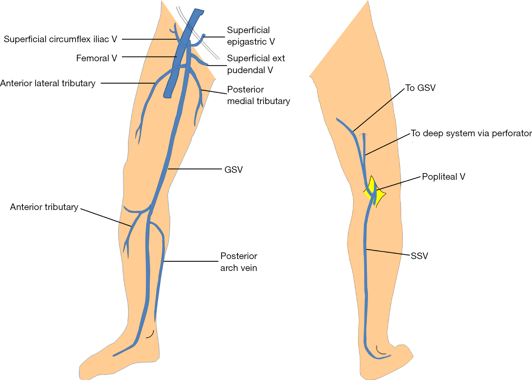 Lower Extremity Venous Reflux Baliyan Cardiovascular Diagnosis